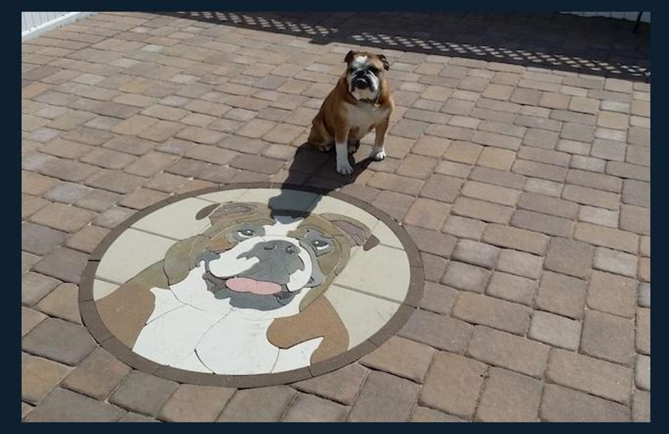 bulldog portrait paver art