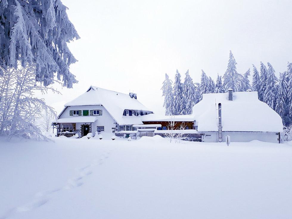 Winter 20190110_120901e.jpg