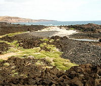 BEACH - PUNTA TONELES.png