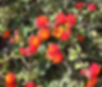 AGUA DE BUEYES 09_edited.jpg