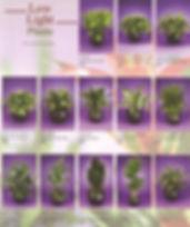 Plant Brochure Pg1_edited_edited.jpg
