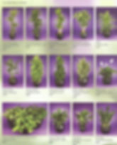Plant Brochure Pg2_edited.jpg
