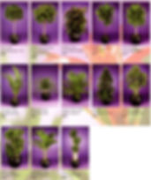 Plant Brochure Pg5_edited.jpg