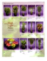Plant Brochure Pg4.jpg