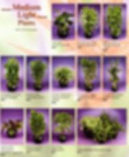 Plant Brochure Pg 3_edited.jpg