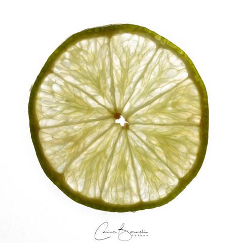 200502 Limonen Querschnitt _I6A3598