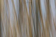 200328 ICM Forest _I6A0825 WEB