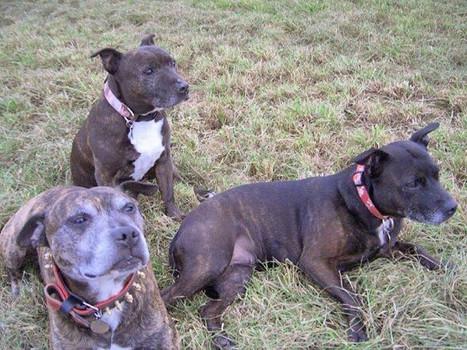 The Originals - Kane, Kia & Tess