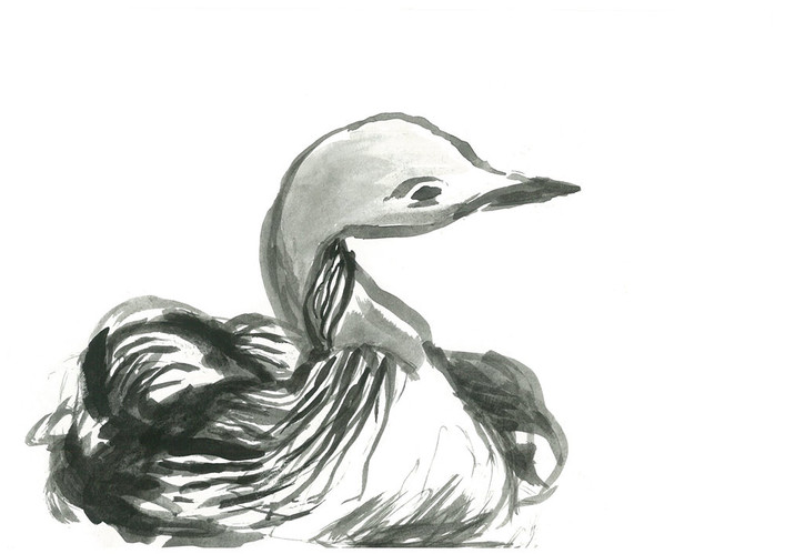 duck1 - from squarespace.jpg
