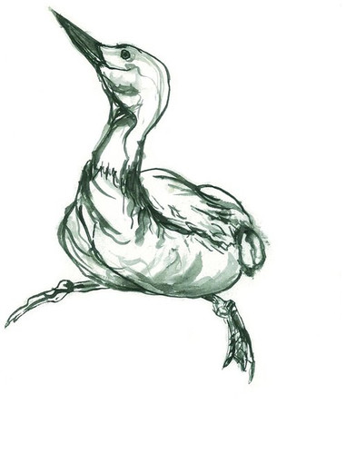 duck2 - from squarespace.jpg