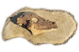 Pachycephalosaurus Playground Dinosaur Dig