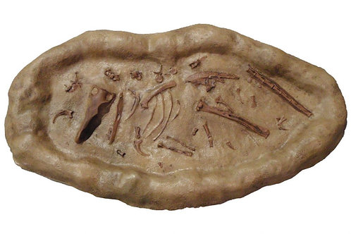 Saurornitholestes Dig