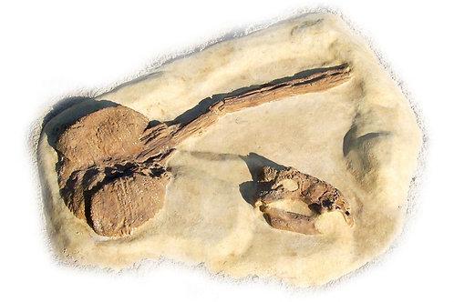 Ankylosaurus Dig