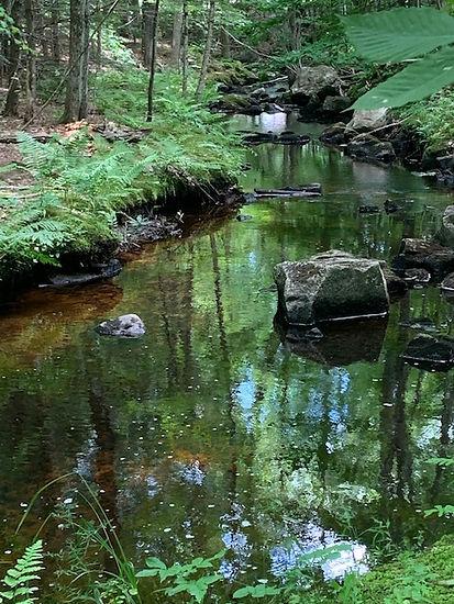 woods brook 2.jpeg