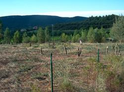 Vesenca-De wijngaard-8