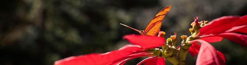 Voador_Natureza (14).jpeg
