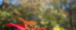 Voador_VanessaZanforlinFotografia_054.jp