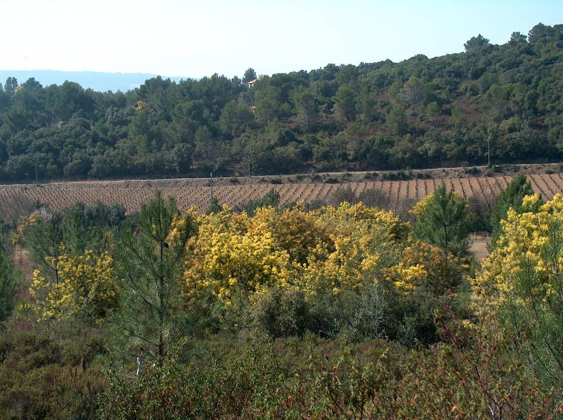 Vesenca-De wijngaard-4