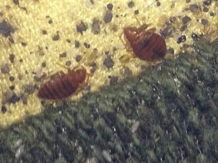 High Rise Bed Bug Problems in Atlanta Georgia