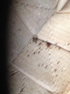 Bed Bugs in Schools .