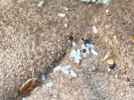 Bed Bug Heat Treatments - Atlanta - Macon - McDonough