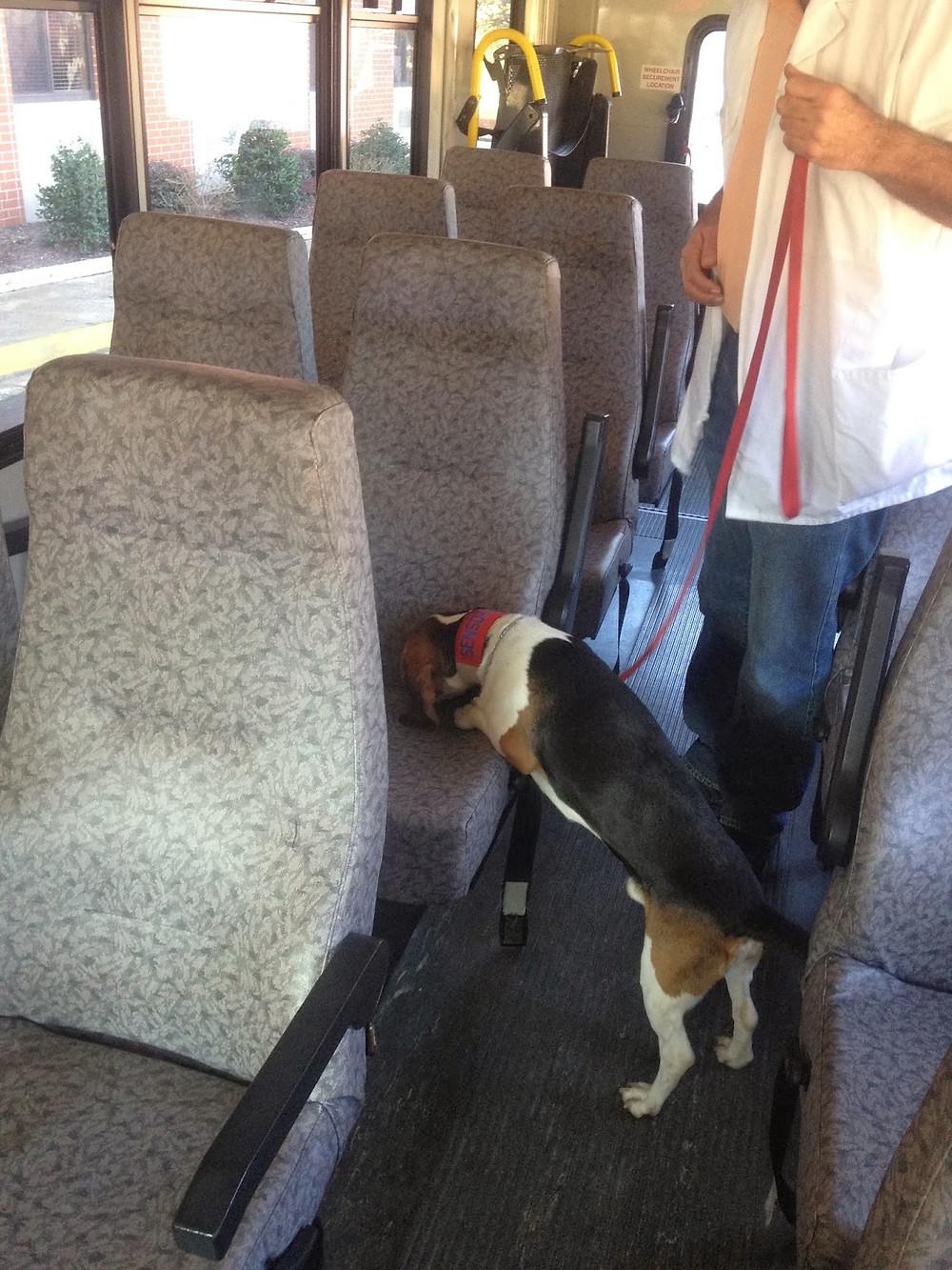 sensor bed bug dog checking bus bed bugs macon atlanta georgia