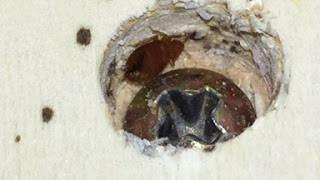 bed bugs,bedbugs,screwhole,screw hole, atlanta,georgia,clark pest remedy