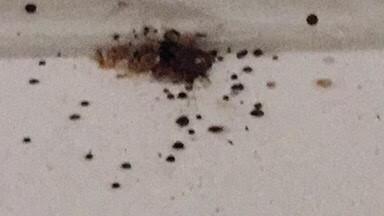 bed bugs atlanta,ceiling bedbugs,heat treatment atlanta,exterminate atlanta beed bugs,