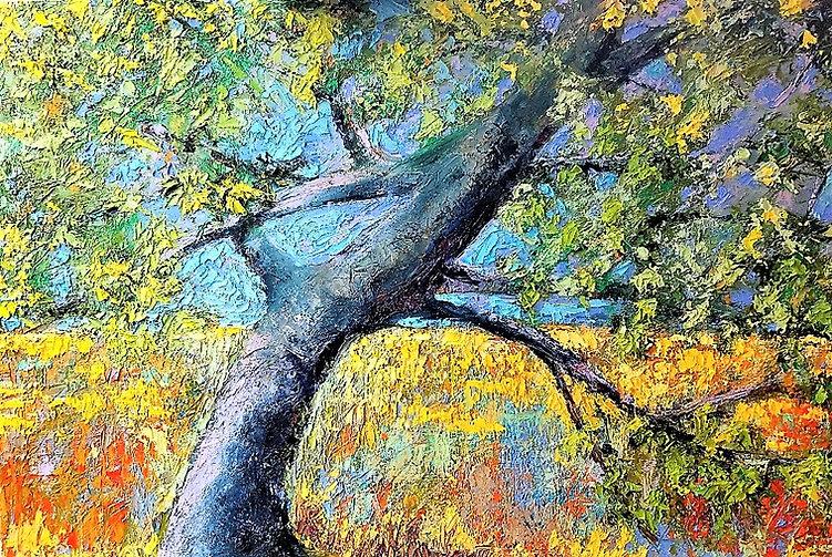 Live Oak in My Backyard .jpg