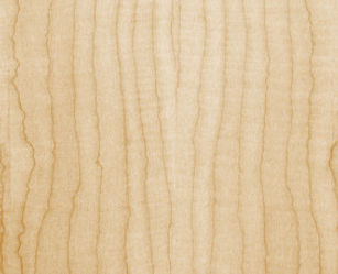 Guitar wood curly maple