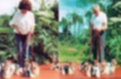 histroire de la race Biewer, Biro et Golddust Yorkshire Terrier