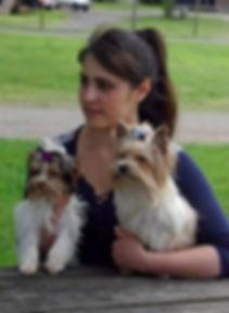 Biewer, Biro et Golddust Yorkshire Terrier