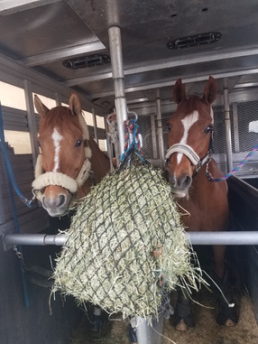 A Day in the Life as a Taco Groom