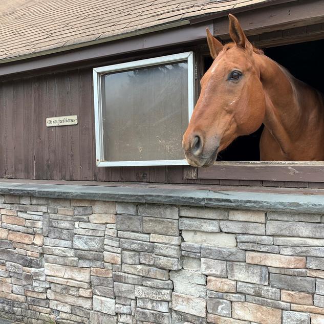 Miles- Shoreline Equestrian Center