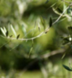 olives-4195771_1920.jpg