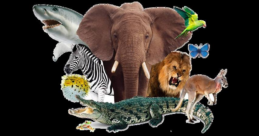 Animal-World_bljlks.png