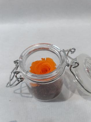 Mini rose éternelle en bocal n°12