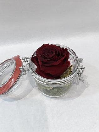 Rose éternelle en bocal n°1