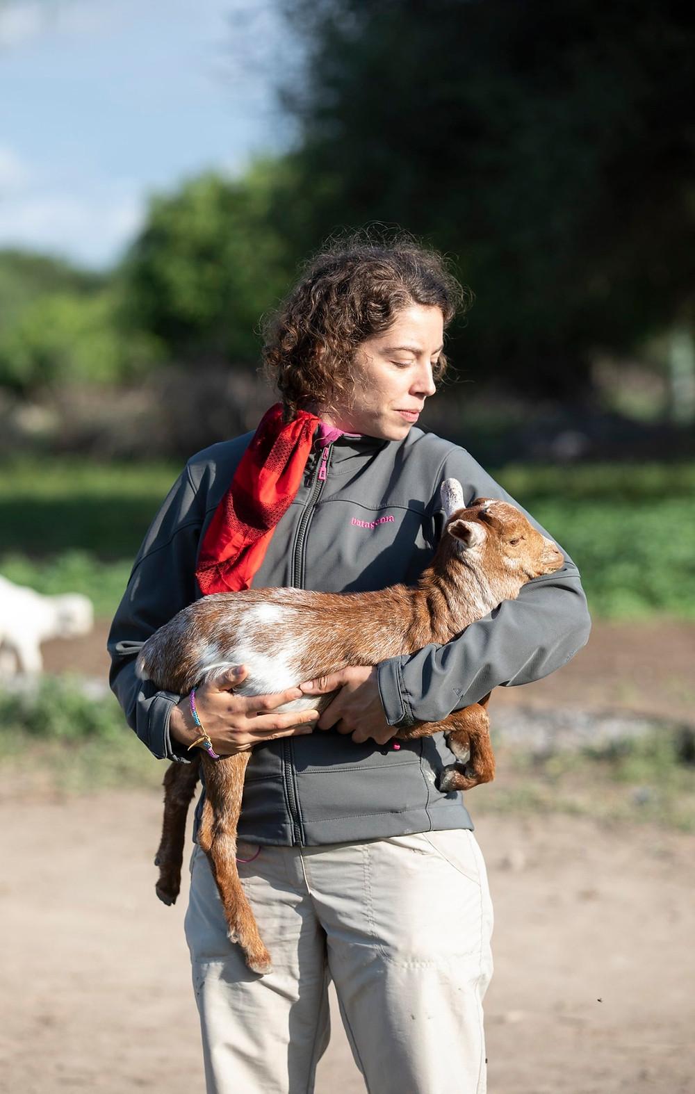 Calf, Maasai travel, Tanzania