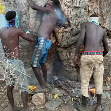The Hadzabe gathering wild honey from a Babobab tree in Tanzania
