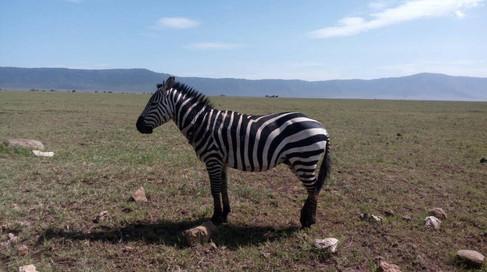 Wild game in Ngorongoro