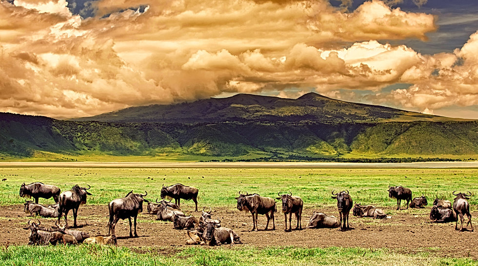 Wildebeests in the Ngorongoro Crater, Tanzania, dramatic sky in the background.jpg