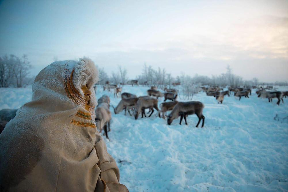 Sami reindeer experience in Norway