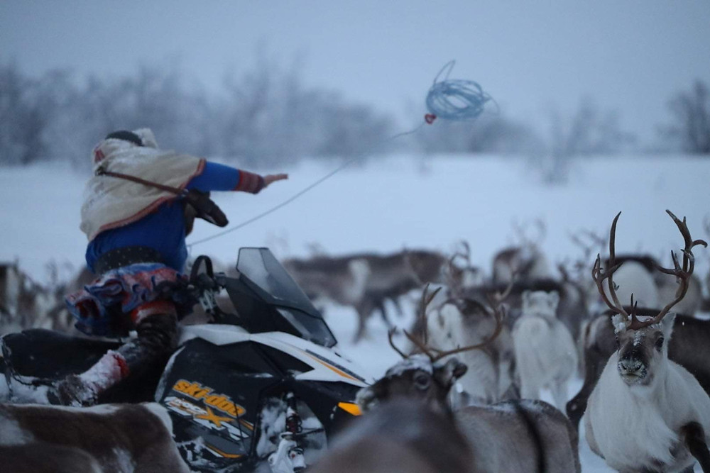 Reindeer experience with Sami in Norway