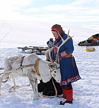 Sami reindeer spring migration experience