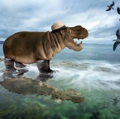 Wet Hippo.jpg