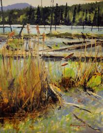 Bullrushes and Logjams 11 x 14 Acrylic on canvas IMG_8398.JPG