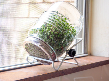 Top 3 Sprouting Tips