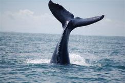 ballenas y bahia malaga (1).bmp