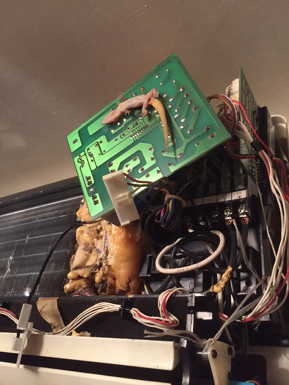 PCB damaged by Vermin